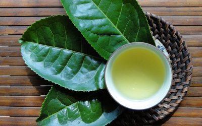 Trà (hay chè) không chỉ thải độc dưỡng sinh mà còn an dưỡng nội tâm người thưởng thức nó, đó là lý do vì sao nước trà là đồ uống phổ biến thứ hai trên thế giới chỉ sau nước
